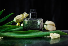 Perfume with green leaves Stock Photos