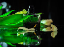 Perfume with green leaves Royalty Free Stock Photos