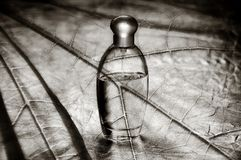 Perfume on leaf Stock Photography