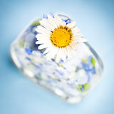 Perfume nature. Flower petals in perfume like bottle. Very fresh, pure and beautiful look Stock Images