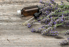 Perfumed herbal oil essence and dreied lavender flowers Royalty Free Stock Photography