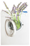 Perfumed lavender Royalty Free Stock Photos