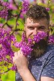 Perfumería y concepto de la fragancia El inconformista disfruta del aroma del flor violeta El hombre barbudo con corte de pelo fr foto de archivo
