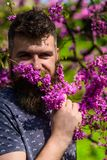 Perfumery and fragrance concept. Hipster enjoys aroma of violet blossom. Bearded man with fresh haircut sniffs bloom of. Judas tree. Man with beard and mustache Stock Images
