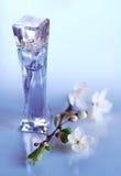perfumes fotos de stock royalty free