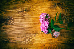 Perfumes and hydrangea wooden background Stock Image