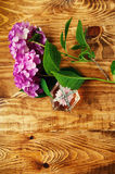 Perfumes and hydrangea wooden background Royalty Free Stock Image