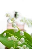 perfumowanie liliy dolina Zdjęcia Royalty Free