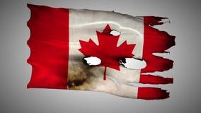 Perfurado canadense, queimado, alfa de ondulação do laço da bandeira do grunge vídeos de arquivo