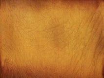 Pergamena ornata pelle dell'elefante Fotografie Stock Libere da Diritti