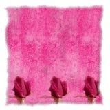 Pergaminho cor-de-rosa romântico Foto de Stock