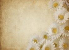 Pergamino de la flor Imagen de archivo libre de regalías