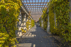 Pergola à Wroclaw, Pologne Images stock