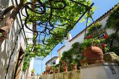 pergola виноградного вина Стоковые Изображения RF