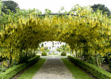 Pergola. With yellow blossoming climbing plants and pebble path leading to a fountain surrounded by shrubs Stock Image