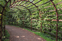 Pergola. Covered plants in the summer the park Royalty Free Stock Image