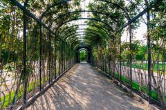 Pergola arcade. Green arcade in a european garden. Vienna, Schönbrunn. 04.2018 Austria Stock Photo