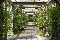 Pergola in a botanical garden Royalty Free Stock Photo