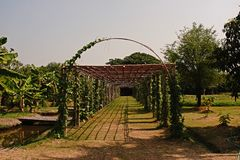 Pergola for climbing plant Royalty Free Stock Images