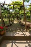 Pergola covered with vines, providing shade on hot days in Ravello, Amalfi Coast. Italy royalty free stock photography