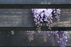 Pergola de jardin Photos stock