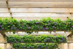 Pergola del fiore della lantana Immagine Stock Libera da Diritti
