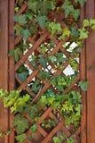 Pergola di legno della rete fissa Fotografia Stock Libera da Diritti