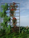 Pergola fiorita Fotografia Stock