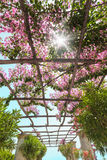 Through the pergola with flowers sun shines. Italy. Royalty Free Stock Image