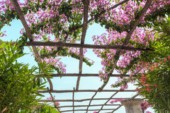 Through the pergola with flowers sun shines. Italy. Royalty Free Stock Photography