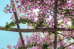 Through the pergola with flowers sun shines. Italy. Royalty Free Stock Photos