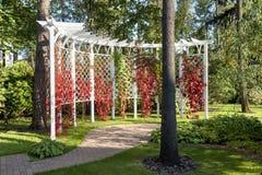 Pergola Garden. And Virginia creeper Stock Images