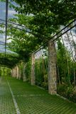 Pergola garden - archway in a garden covered with climbing grapes royalty free stock images