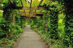 Pergola. With grape and ivy  in the garden Stock Photos