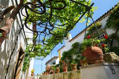 Pergola and grapevine. A view looking up at a pergola or overhead trellis partially covered by a grapevine between two buildings royalty free stock images