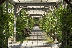 Pergola In A Botanical Garden Royalty Free Stock Photo