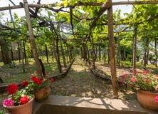 Pergola met wijnstokken wordt behandeld, die schaduw op hete dagen in Ravello, Amalfi Kust verstrekken die royalty-vrije stock foto's