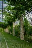 Pergola ogród - archway w ogródzie zakrywającym z wspinaczkowymi winogronami obrazy royalty free