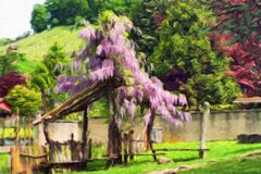 Pergola overgrown with flowering wisteria. Royalty Free Stock Photography