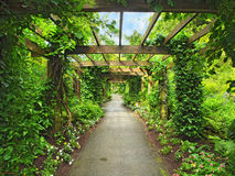 Pergola passage Royalty Free Stock Image