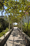 Pergola passage in the garden Royalty Free Stock Photos