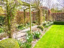 Pergola in the garden surrounded by daffodils. Pergola passage in the garden surrounded by daffodils in early spring Stock Photography