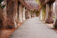 Pergola path Royalty Free Stock Image