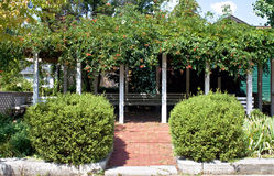 Pergola with Trumpet Vines Royalty Free Stock Photos