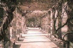 Pergola tunnel of climbing plant Royalty Free Stock Image