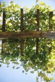 Pergola with vines Royalty Free Stock Photo