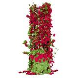 Pergola voor de tuin Stock Afbeelding