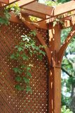 Pergola. Wooden pergola covered by hanging grapevines Royalty Free Stock Images