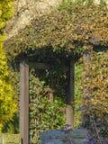 pergolahoogtepunt van bladeren Stock Fotografie