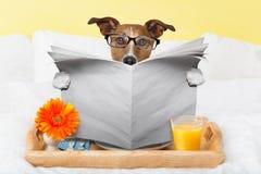 Periódico de la lectura del perro Foto de archivo libre de regalías